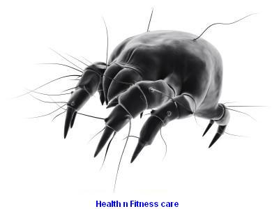 What Are Bed Bugs? How To Get Proper Bed Bug Treatment?