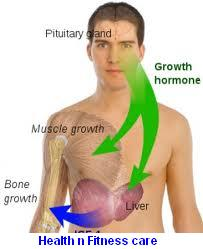 How To Increase HGH Levels Naturally