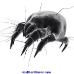 RECOGNIZE BED BUGS FOR BED BUG TREATMENT