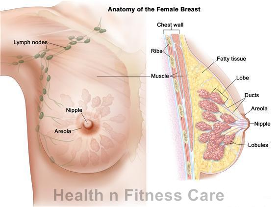 Guidelines For Breast Cancer Treatment